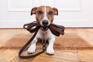 puppy_obedience