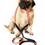 Next Basic Obedience Class
