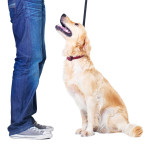 Basic Obedience/Puppy Class starts Monday April 18th, 2016