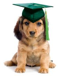 Basic Obedience/Puppy Class Starts June 6th!
