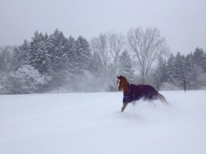 snow-day-horse
