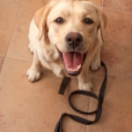 Basic Obedience/Puppy Class starts October 24th