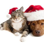 Christmas in the Ville Pet Parade Registration