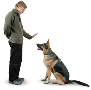 Puppy Class/Basic Obedience Begins January 9th.