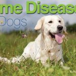 Lyme Disease Presentation – Thursday October 19th – 6:30 pm