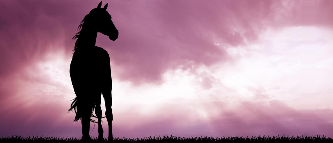 horse_skyline