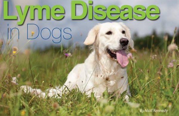 Lyme Disease Presentation – Thursday October 19th – 6:30 pm