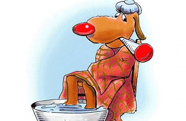 Canine Influenza update